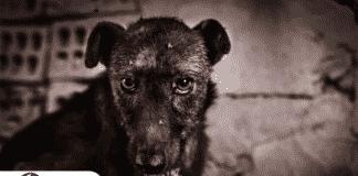 Condenan a mujer a 6 meses de cárcel por dejar morir a su perro en la terraza de su vivienda