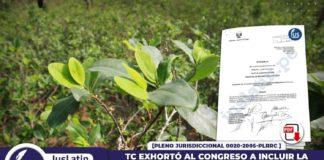 TC exhortó al Congreso a incluir la planta de hoja de coca en lista de cultivos reconocidos como Patrimonio
